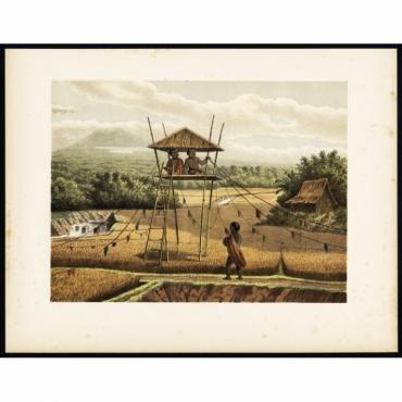 Pl.II p.142 Children chasing birds in rice field near Tempoeran - Perelaer (1888)