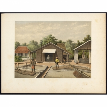 Pl.IIb p.48 Coffee beans drying in compound Solok - Perelaer (1888)