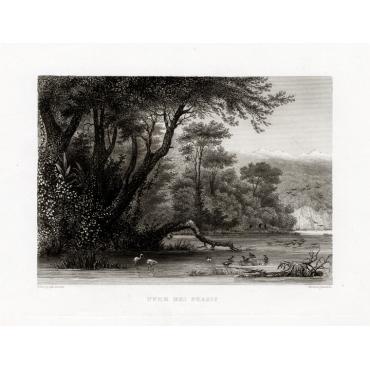 Ufer des Phasis - Meyer (c.1840)