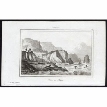 Pl.269 Chasse aux Phoques, Australie - Rienzi (1836)