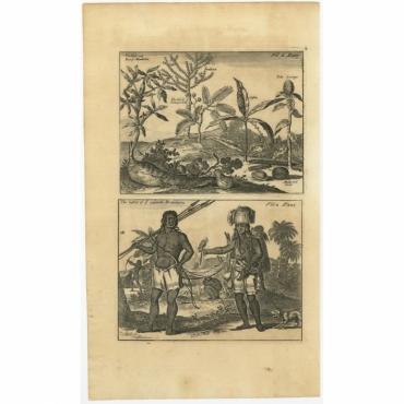The herbs and root of Mandioka - The habit of ye inland Brazilians - Nieuhof (1744)
