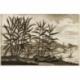 Kokos Boom/Palma coccifera, Piper Indicum, Zingiber (..) - Van der Aa (1725)
