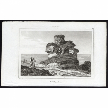 Pl.275 Nid Gigantesque Australie - Rienzi (1836)