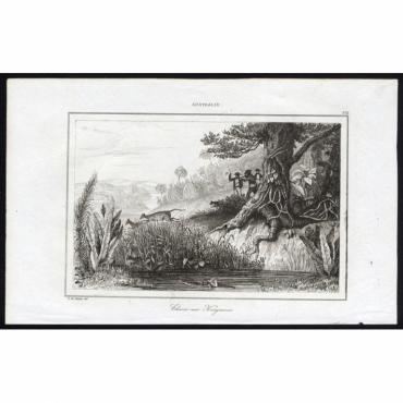Pl.276 Chasse aux Kangarous, Australie - Rienzi (1836)