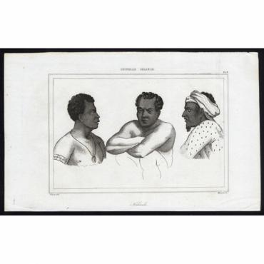 Naturels - 242, Nouvelle Irlande - Massard (1836)