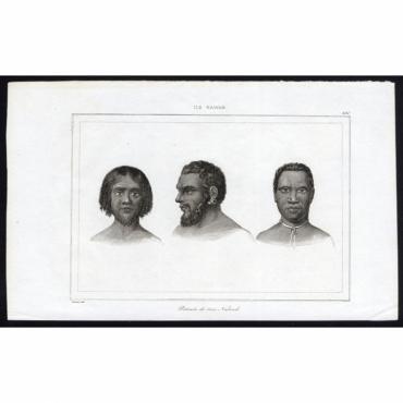 Portraits de trois Naturels - 230, Ile Rawak - Rienzi (1836)
