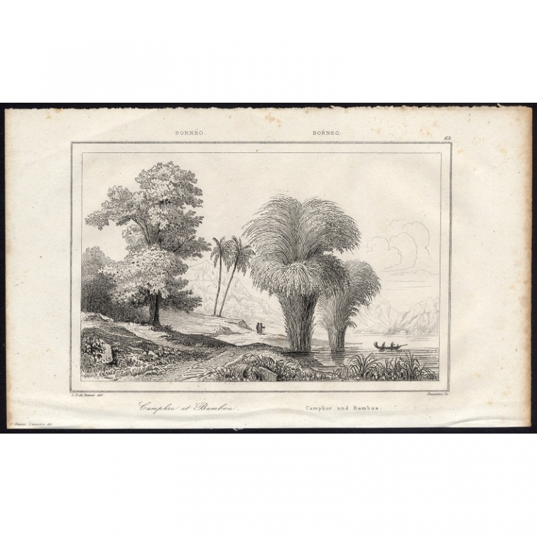 Camphre et Bambou - 63, Borneo - Rienzi (1836)