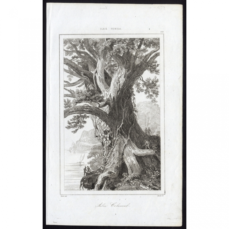 Arbre Colossal - 195, Iles Tonga - Rienzi (1836)