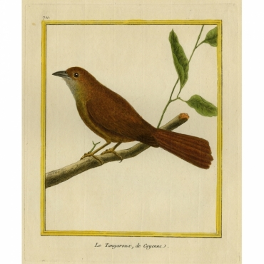 Pl.711 La Tangaroux, de Cayenne - Martinet (1770)