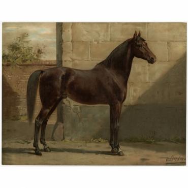 Pl. 6 Het Oost-Pruissische Paard - Eerelman (1898)