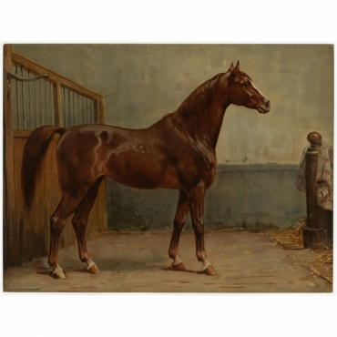 Pl. 14 Het Hannoversche Paard - Eerelman (1898)