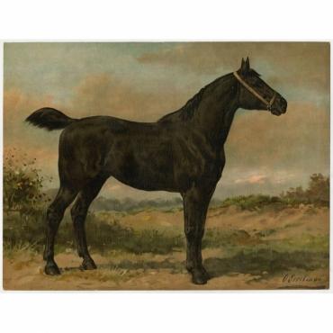 Pl. 39 Het Iersche Paard - Eerelman (1898)