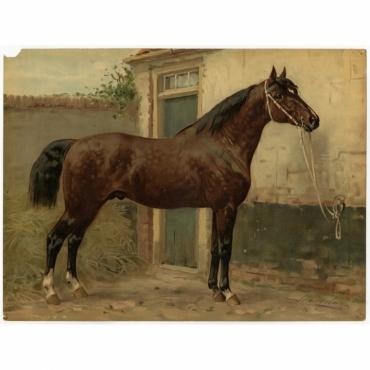 Pl. 17 Het Normandische paard - Eerelman (1898)