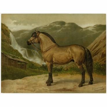 Pl.38 Het Noorweegsche Paard - Eerelman (1898)