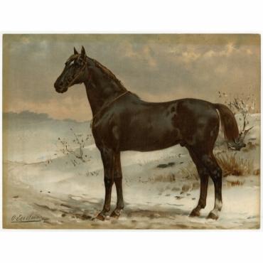 Pl. 27 Het Russische Halfbloed Paard - Eerelman (1898)