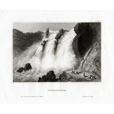 Puppanassum - Meyer (1850)