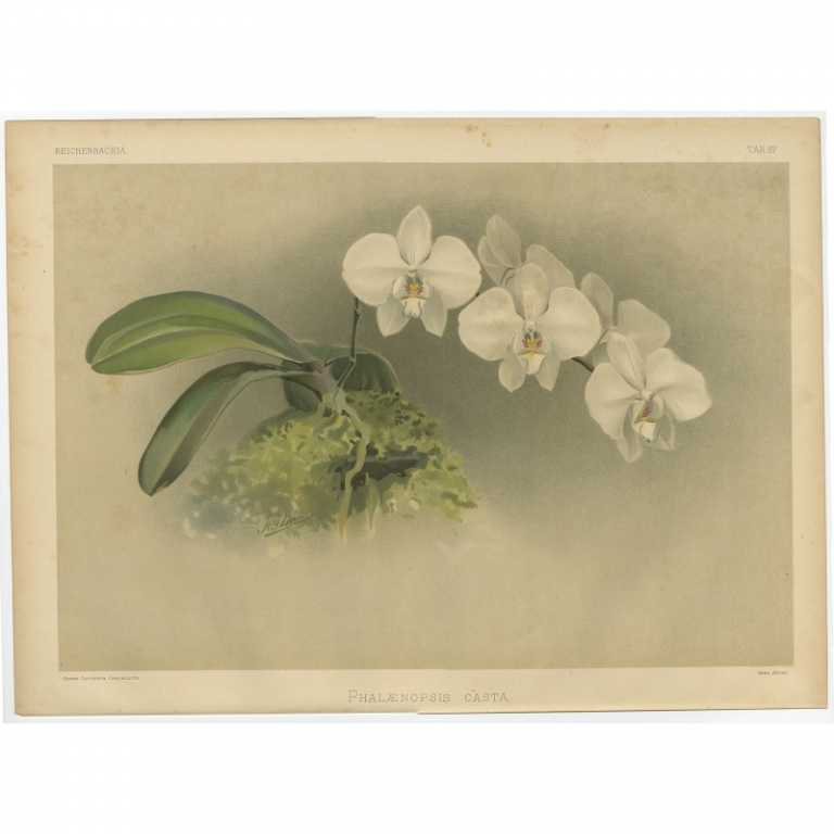 Reichenbachia - Tab 87 - Phalaenopsis casta - Leutzsch (1888)