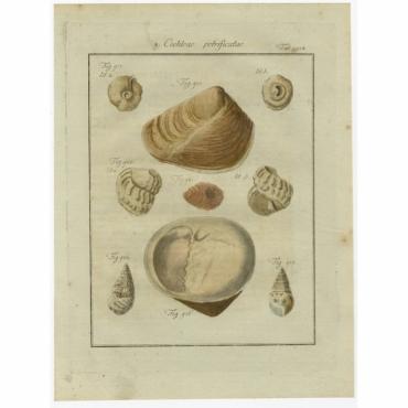 Tab. 114. Cochleae petrificatae - Chemnitz (1786)