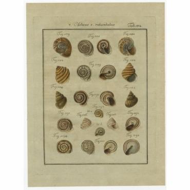 Tab. 132. Helices e rotundatae - Chemnitz (1786)