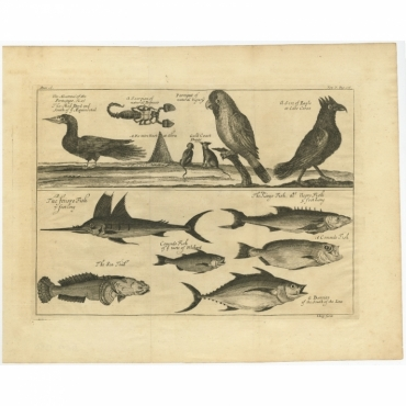 Untitled Print of Guinea Gulf birds and fish - Kip (1744)