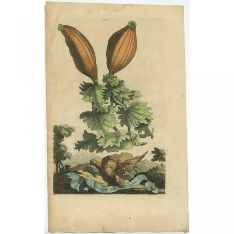 Guanabanus Folio Ficulneo - Munting (1696)