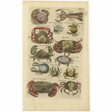 Tab. V. Cancer Marinus (..) - Jonston (1657)
