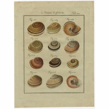 Tab. 131 - Helices, Globosae - Chemnitz (1786)