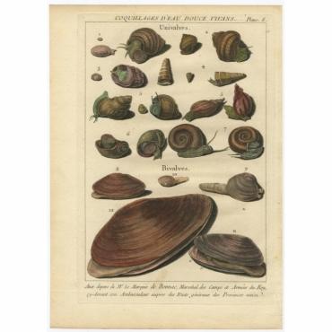 Planc 8 - Coquillages d'Eau douce Vivans - D'Argenville (1757)