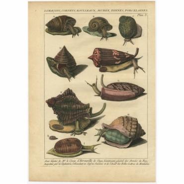 Planc 3 - Limacons, Cornets, Roulleaux, Murex (..) - D'Argenville (1757)