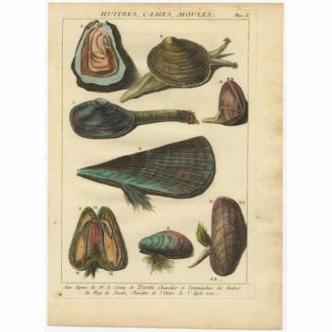 Planc 5 - Huitres, Cames, Moules - D'Argenville (1757)