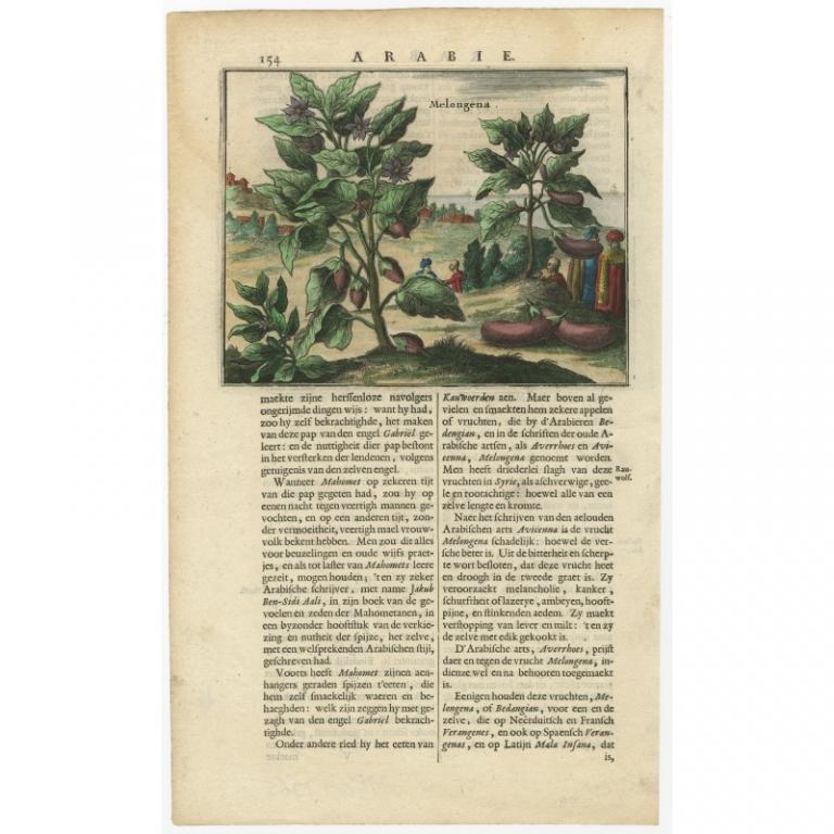 Melongena - Dapper (c.1680)