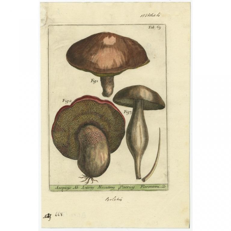 Tab 69 - Michelio (1729)