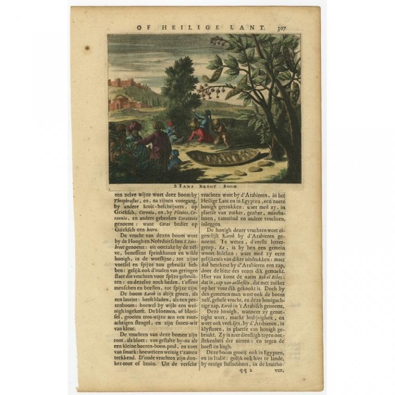 S. Ians Broot Boom - Dapper (1680)