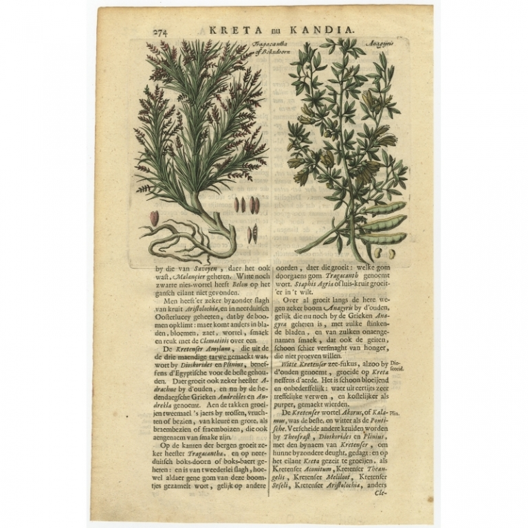 Fragacantha of Bokxdoorn - Anagijris - Dapper (1688)