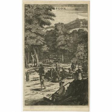 Hoe men de Caneel schilt opt Eyland Ceylon - Baldaeus (1672)