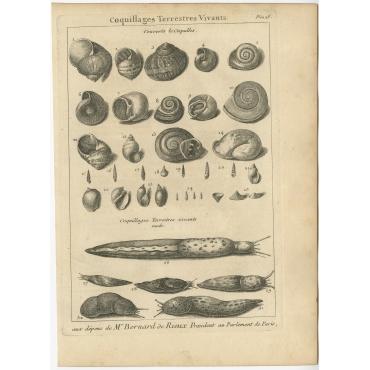 Coquillages Terrestres Vivants - Flipart (1742)
