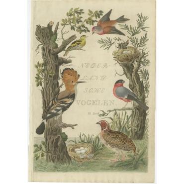 Nederlandsche Vogelen - Sepp & Nozeman (1797)