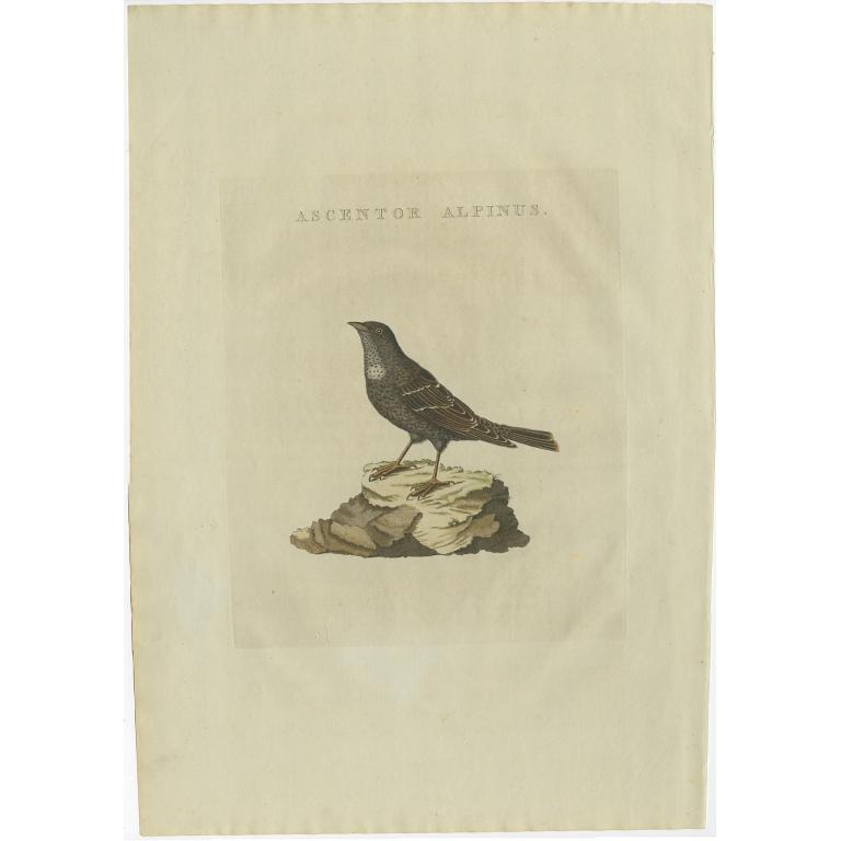 Ascentor Alpinus - Sepp & Nozeman (1829)