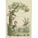 Nederlandsche Vogelen - Sepp & Nozeman (1829)
