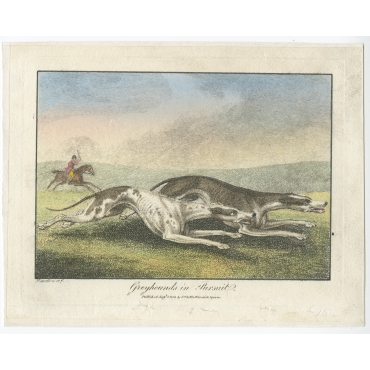 Greyhounds in Pursuit - Howitt (1800)