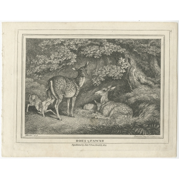 Does & Fawns - Howitt (1812)
