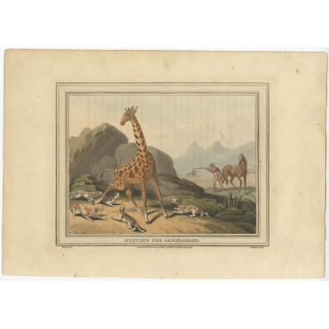 Hunting the Camelopard - Dubourg (1813)