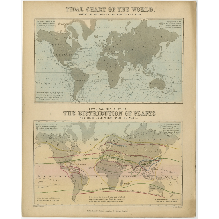 Tidal Chart and Botanical Map - Reynolds (1843)