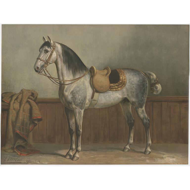 Lippizaner - Schoenbeck (1903)