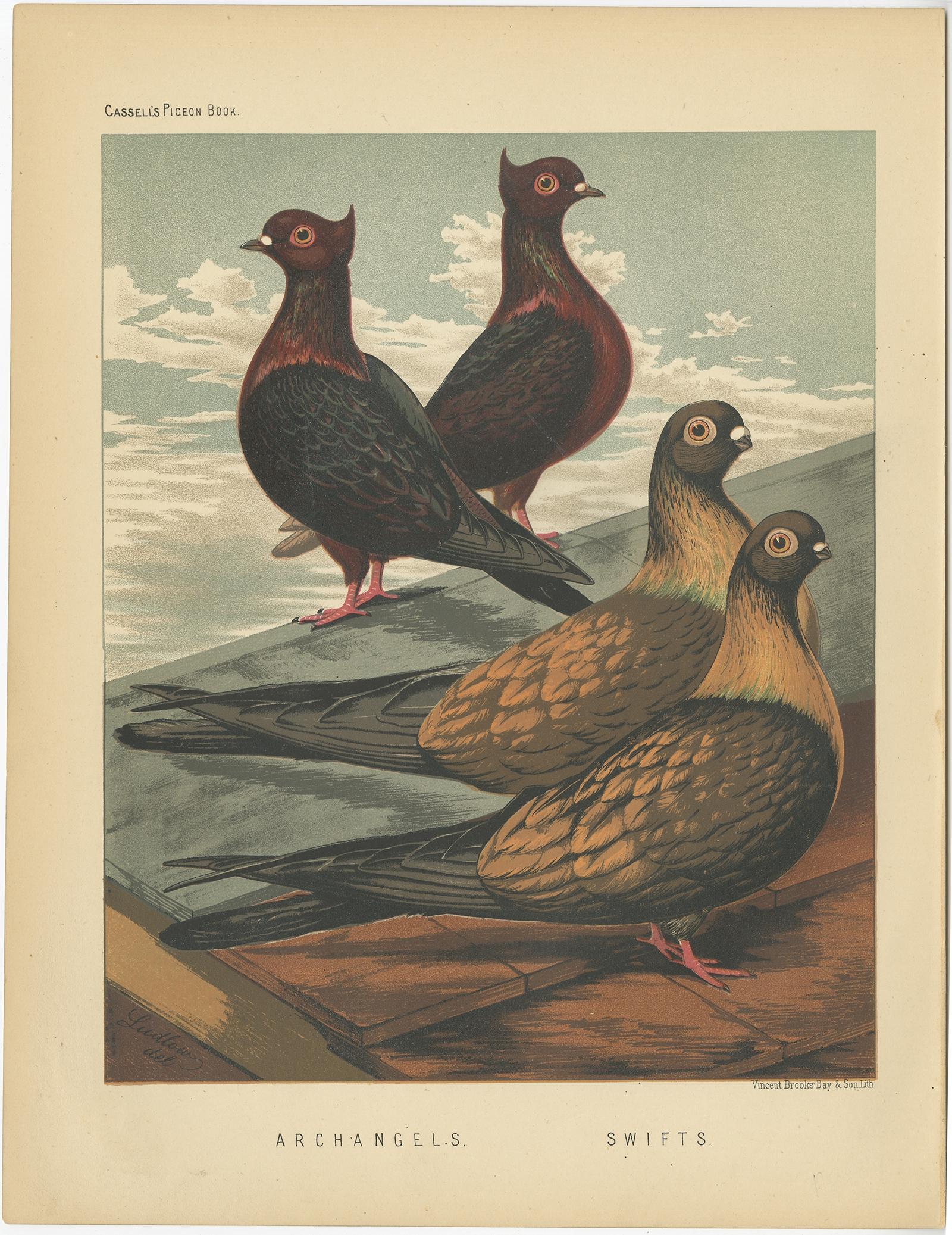 Swifts - Cassell (1874)