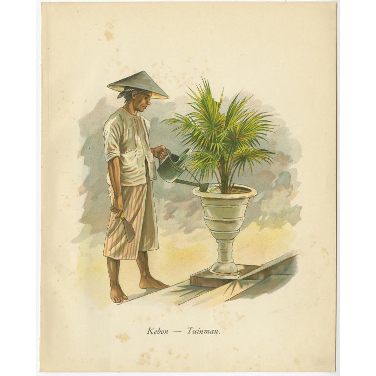 Kebon-Tuinman - Van der Heijden (1909)