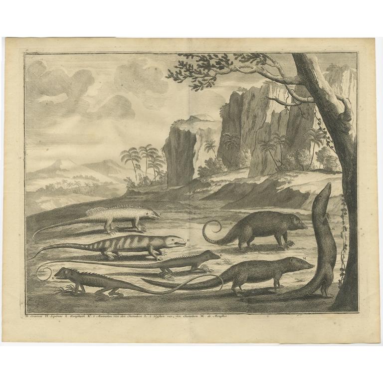 Coescoes, Lipanno, Kemphaan (..) - Valentijn (1726)