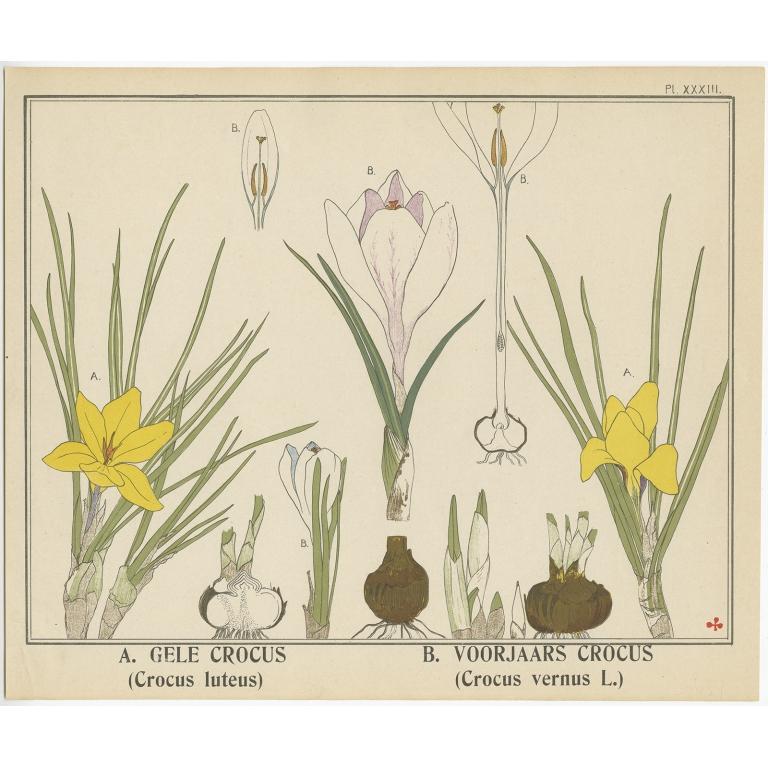 Gele Crocus - Klaver (1905)
