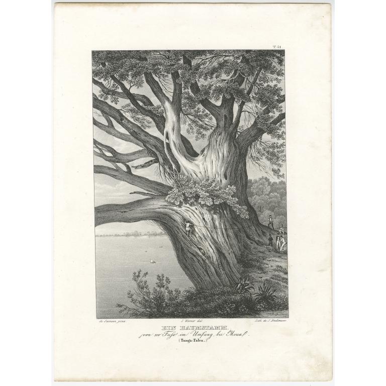 Ein Baumstamm - Brodtmann (c.1836)