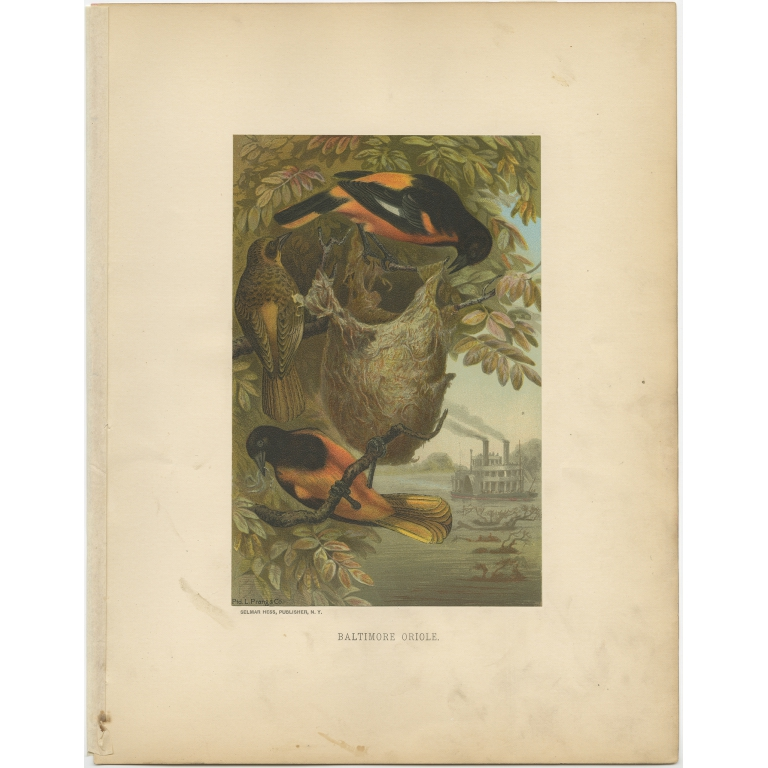 Antique Bird Print of the Woodcock by Prang (1898)